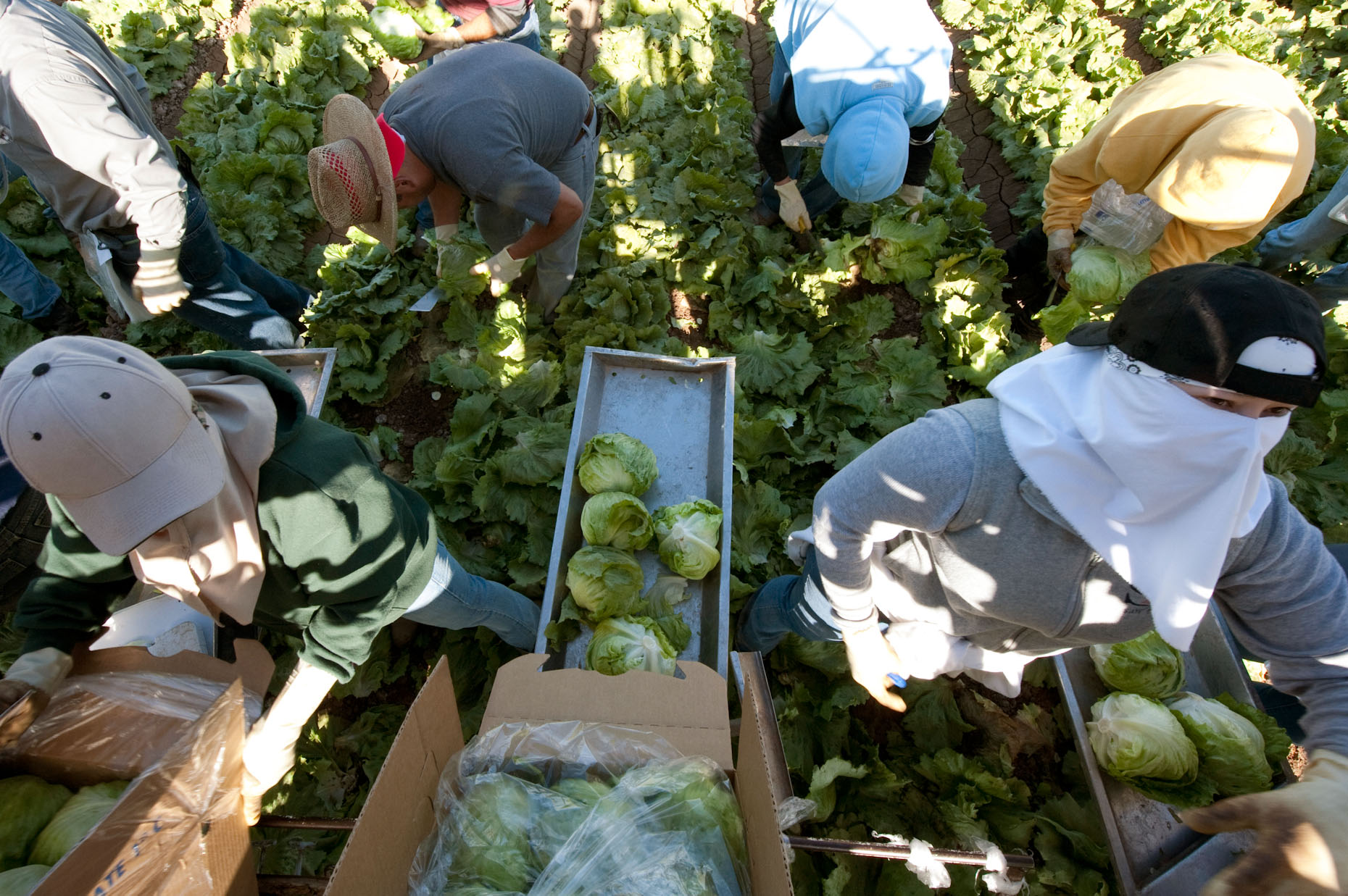 Migrant Lettuce Workers